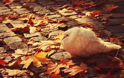 Pássaros de outono