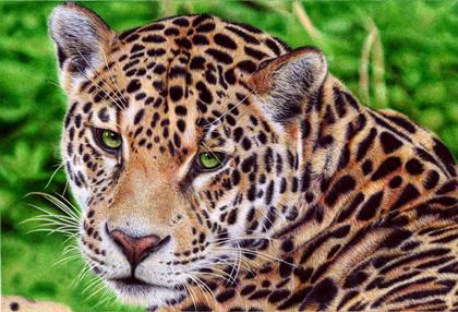 Samuel Silva - Jaguar